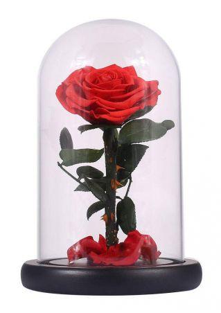 Glass Bottle Preserved Eternal Rose