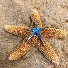 Inlaid Rhinestone Starfish Pendant Necklace