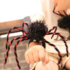 Halloween Spider Creative Slap Bracelet